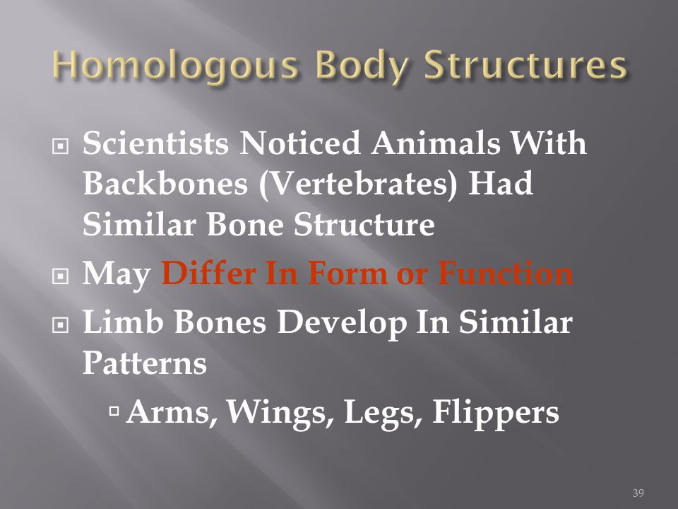  Scientists Noticed Animals With Backbones (Vertebrates) Had Similar Bone Structure  May Differ In Form or Function  Limb Bones Develop In Similar Patterns  Arms, Wings, Legs, Flippers 39