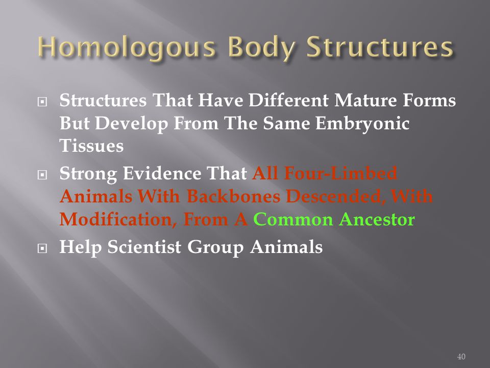  Structures That Have Different Mature Forms But Develop From The Same Embryonic Tissues  Strong Evidence That All Four-Limbed Animals With Backbones Descended, With Modification, From A Common Ancestor  Help Scientist Group Animals 40