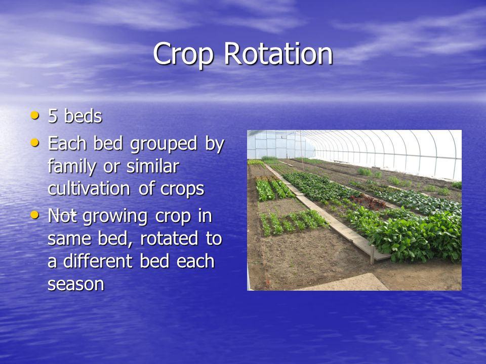 Crop Rotation 5 beds 5 beds Each bed grouped by family or similar cultivation of crops Each bed grouped by family or similar cultivation of crops Not growing crop in same bed, rotated to a different bed each season Not growing crop in same bed, rotated to a different bed each season