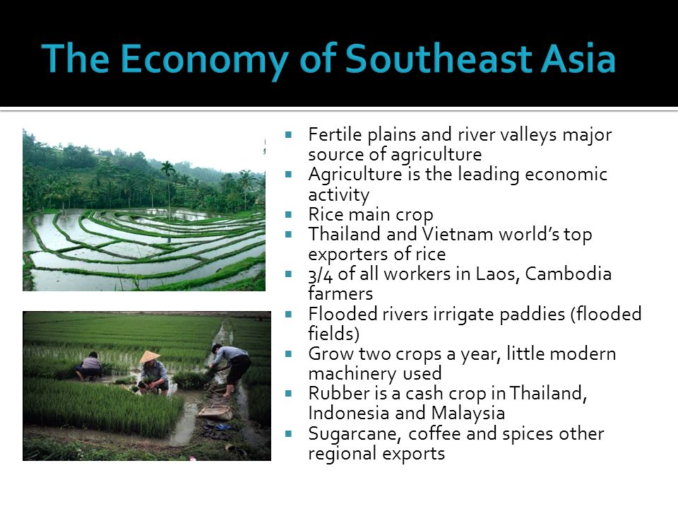  Fertile plains and river valleys major source of agriculture  Agriculture is the leading economic activity  Rice main crop  Thailand and Vietnam world's top exporters of rice  3/4 of all workers in Laos, Cambodia farmers  Flooded rivers irrigate paddies (flooded fields)  Grow two crops a year, little modern machinery used  Rubber is a cash crop in Thailand, Indonesia and Malaysia  Sugarcane, coffee and spices other regional exports