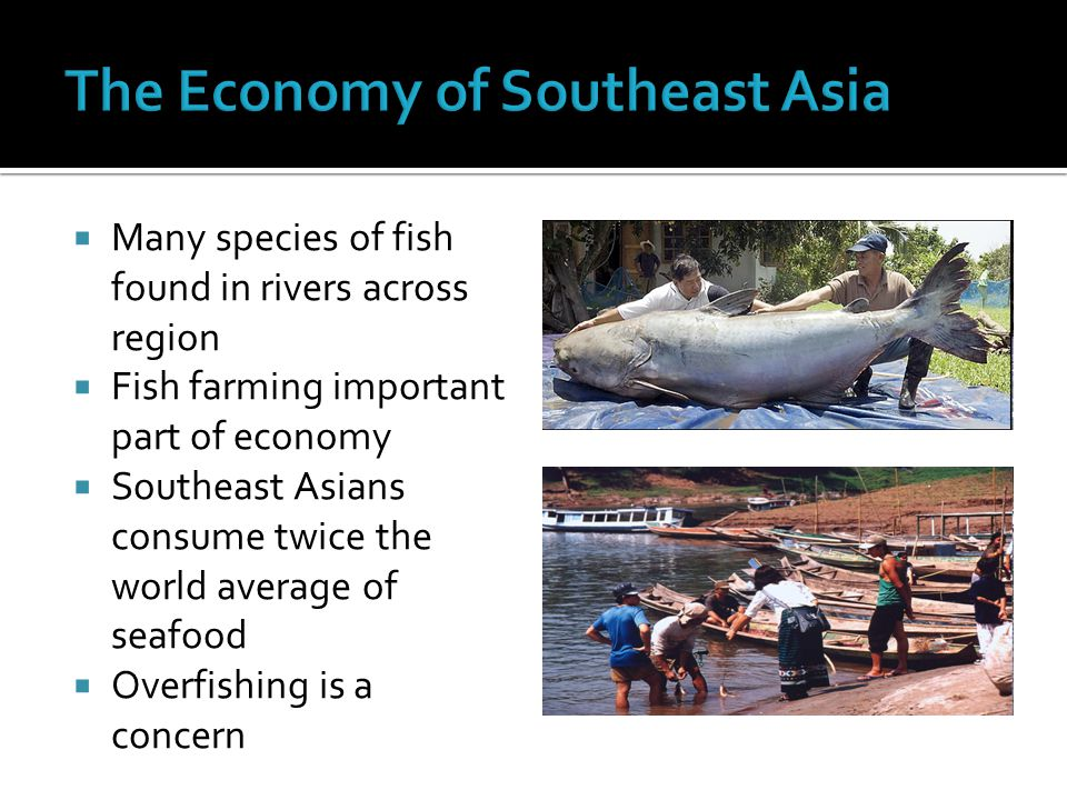  Many species of fish found in rivers across region  Fish farming important part of economy  Southeast Asians consume twice the world average of seafood  Overfishing is a concern