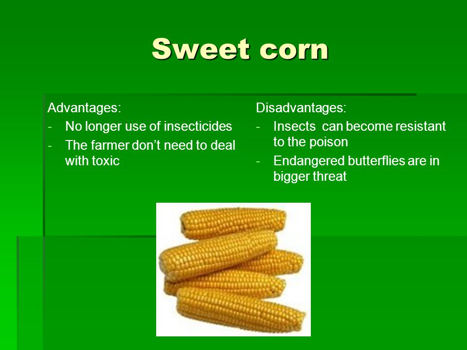 Sweet corn Sweet corn Advantages: - -No longer use of insecticides - -The farmer don't need to deal with toxic Disadvantages: - -Insects can become resistant to the poison - -Endangered butterflies are in bigger threat