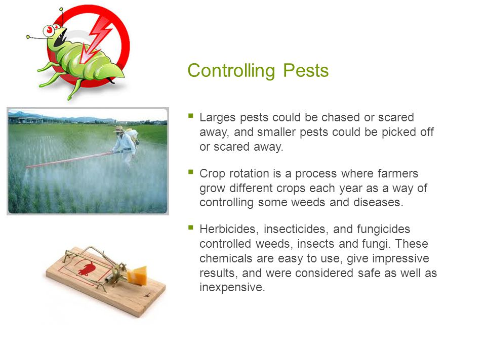 Controlling Pests  Larges pests could be chased or scared away, and smaller pests could be picked off or scared away.