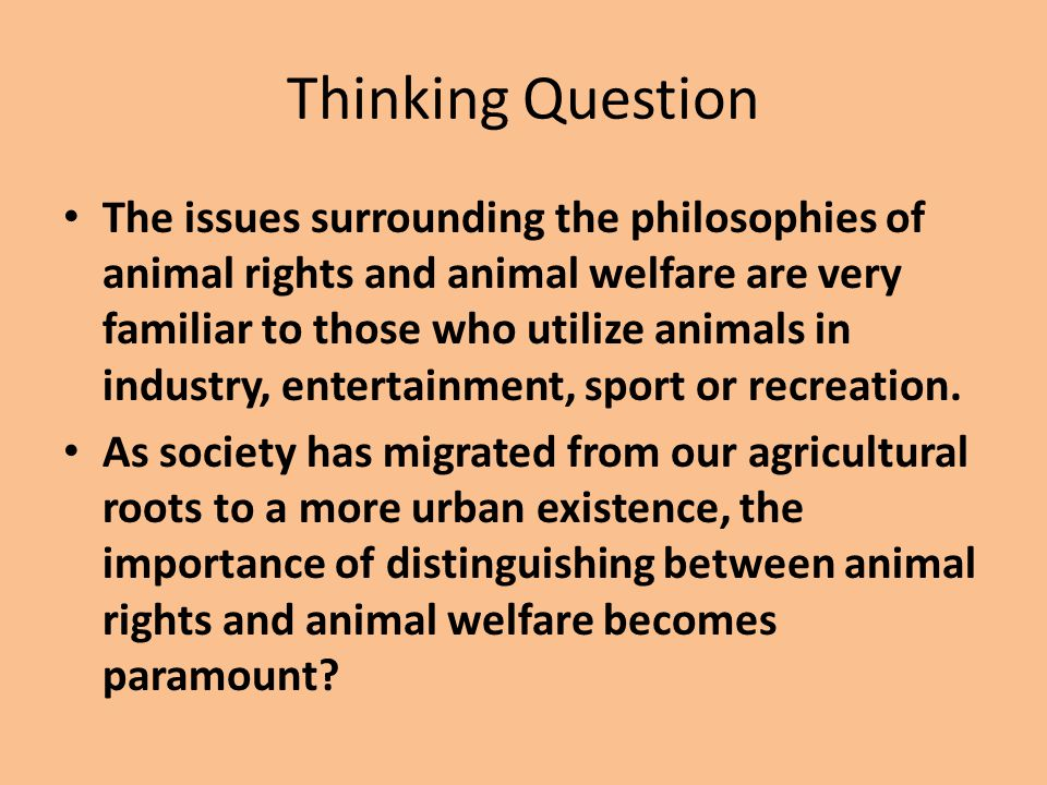 animal rights versus the food production industry philosophy essay The animal rights movement, led by the humane society of the united states (hsus), believes that it's morally abhorrent to raise and eat animals for nutrition so, naturally, they're opposed to animal agriculture.