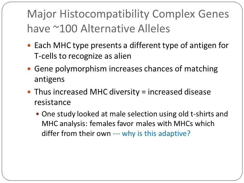 Major Histocompatibility Complex Genes have ~100 Alternative Alleles Each MHC type presents a different type of antigen for T-cells to recognize as alien Gene polymorphism increases chances of matching antigens Thus increased MHC diversity = increased disease resistance One study looked at male selection using old t-shirts and MHC analysis: females favor males with MHCs which differ from their own --- why is this adaptive