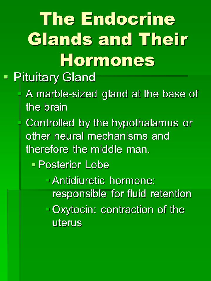 The Endocrine Glands and Their Hormones  Pituitary Gland  A marble-sized gland at the base of the brain  Controlled by the hypothalamus or other neural mechanisms and therefore the middle man.