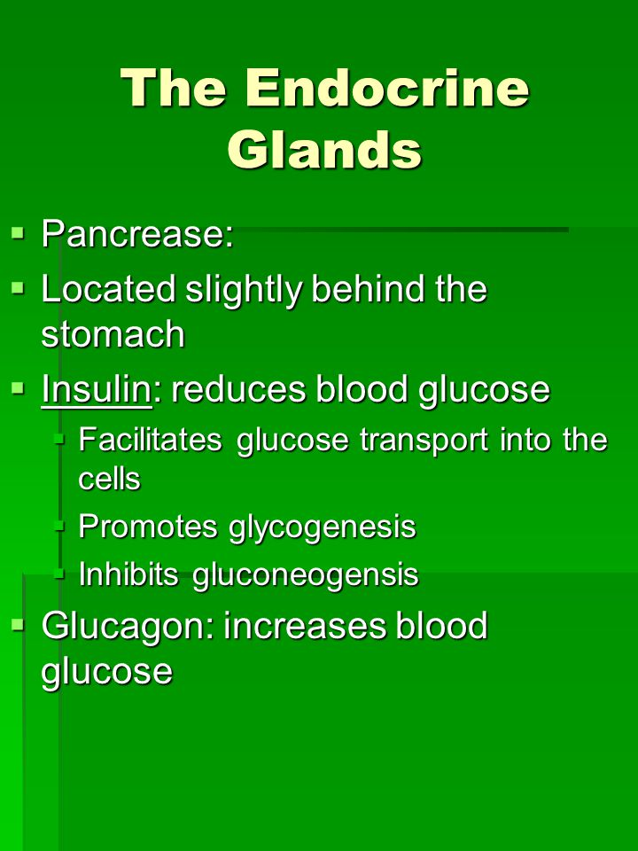 The Endocrine Glands  Pancrease:  Located slightly behind the stomach  Insulin: reduces blood glucose  Facilitates glucose transport into the cells  Promotes glycogenesis  Inhibits gluconeogensis  Glucagon: increases blood glucose