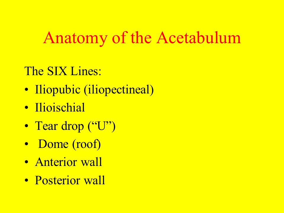The Acetabulum Hip Joint And Proximal Femur Trauma Mi Zucker Md