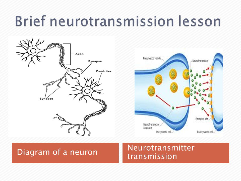 Diagram of a neuron Neurotransmitter transmission