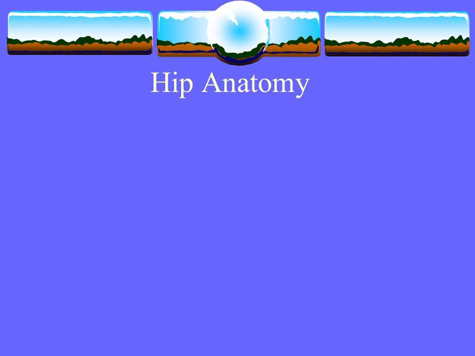 Hip Anatomy. Bony Anatomy  Femur  Femoral Head  Femoral Neck ...