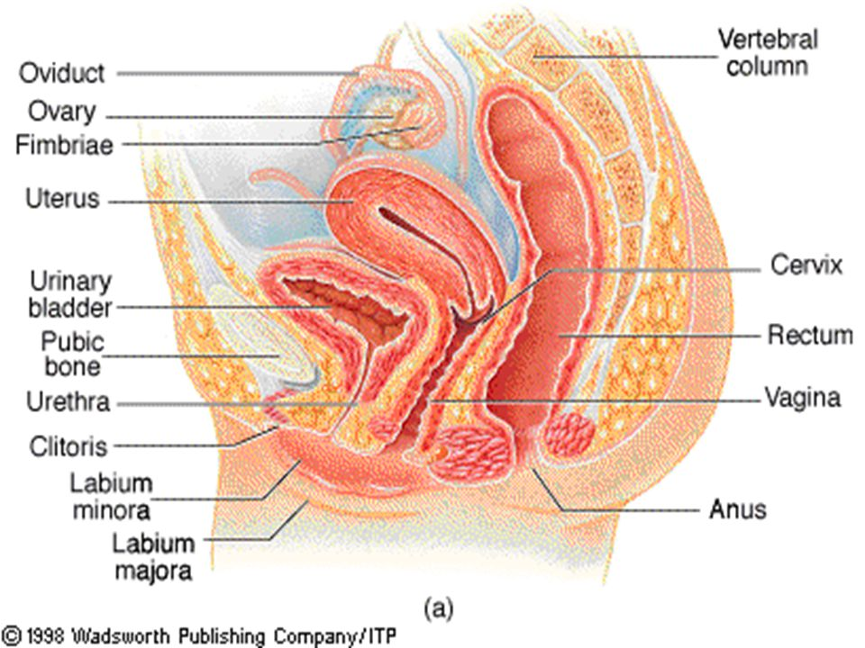 Rectal Examination. Rectal Examination Anatomy I The rectum is the ...