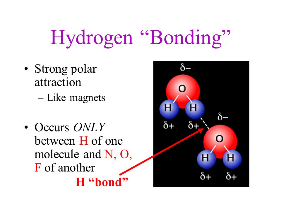 Hydrogen Bonding Strong polar attraction –Like magnets Occurs ONLY between H of one molecule and N, O, F of another H bond
