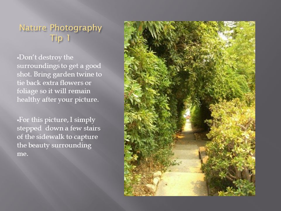 Nature Photography Tip 1  Don't destroy the surroundings to get a good shot.