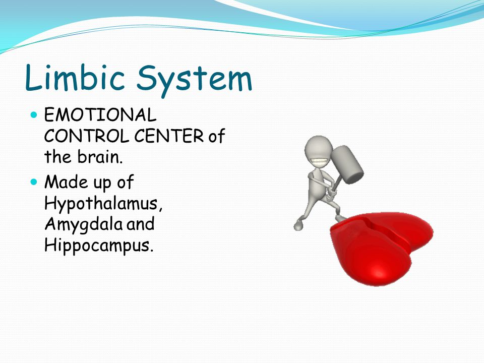 Limbic System EMOTIONAL CONTROL CENTER of the brain.