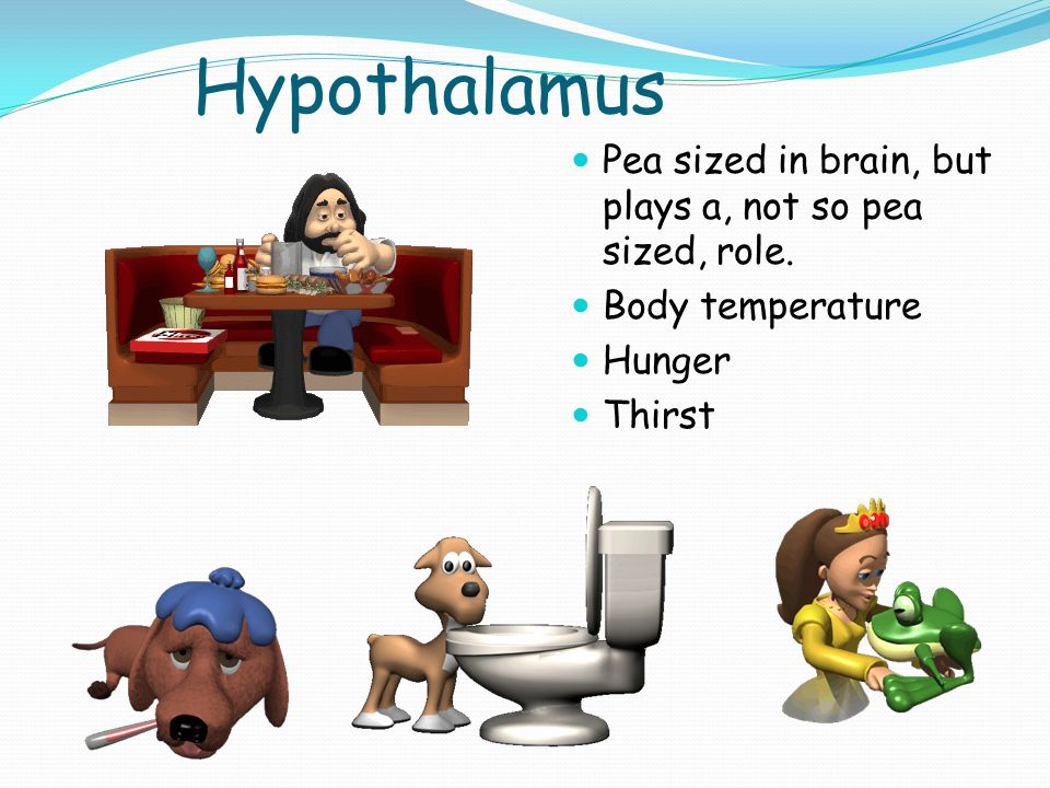 Hypothalamus Pea sized in brain, but plays a, not so pea sized, role.