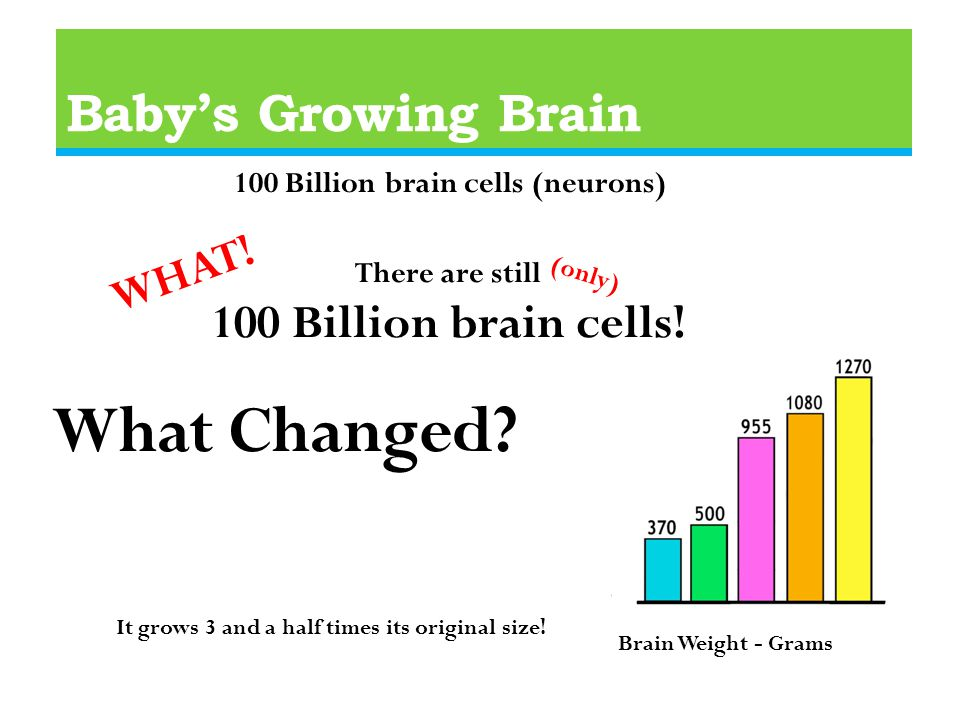 Baby's Growing Brain 100 Billion brain cells (neurons) There are still 100 Billion brain cells.