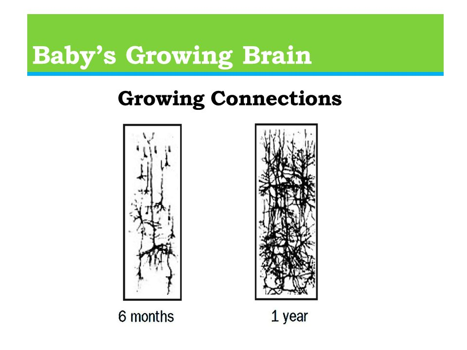 Baby's Growing Brain Growing Connections