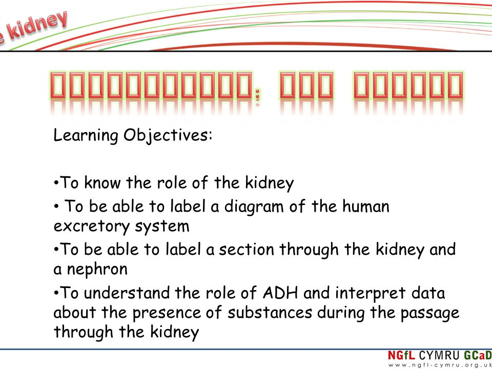 Learning Objectives To Know The Role Of The Kidney To Be Able To