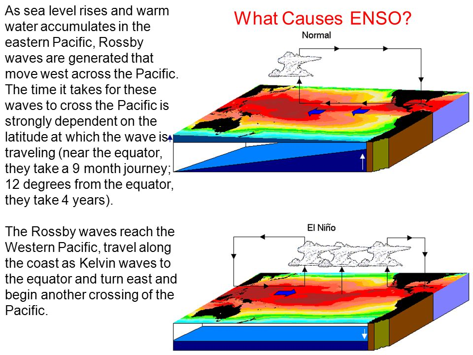 As sea level rises and warm water accumulates in the eastern Pacific, Rossby waves are generated that move west across the Pacific.