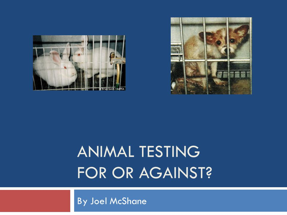 animals for testing Animal testing is wrong because animals can't say no what if you weren't able to say no about being tested on animal testing isn't fair to the animals because it is wrong in every way possible.