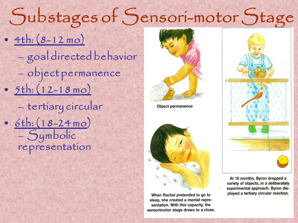 Substages of Sensori-motor Stage 4th: (8-12 mo) –goal directed behavior –object permanence 5th: (12-18 mo) –tertiary circular 6th: (18-24 mo) –Symbolic representation