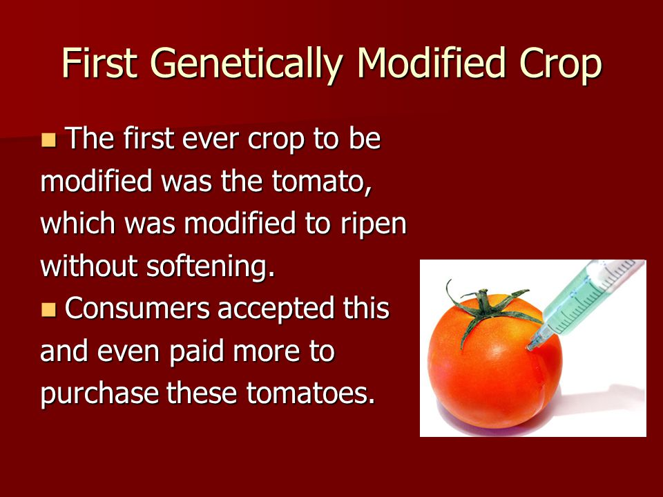 First Genetically Modified Crop The first ever crop to be The first ever crop to be modified was the tomato, which was modified to ripen without softening.