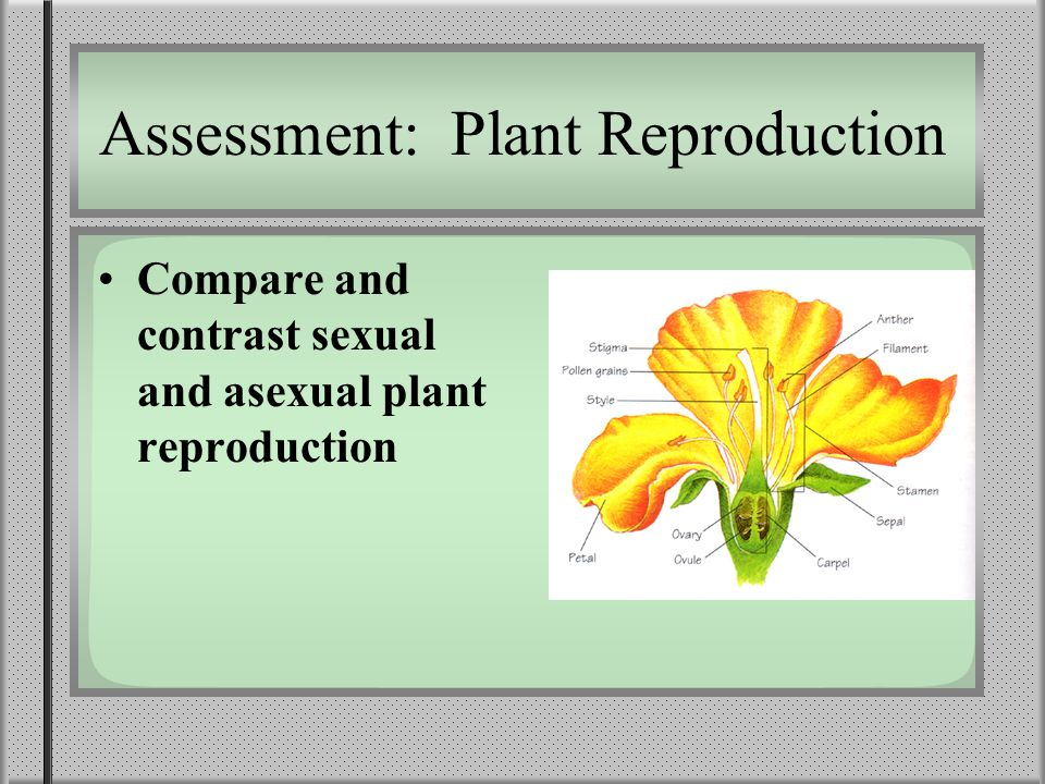 Compare and contrast sexual and asexual reproduction in flowering plants