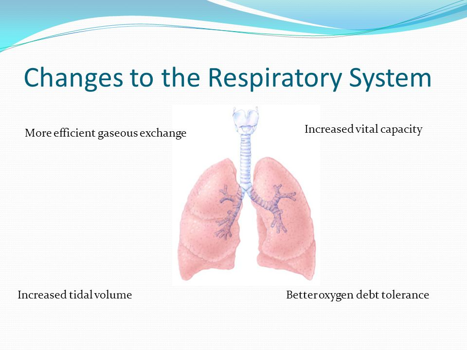 Changes to the Respiratory System More efficient gaseous exchange Increased vital capacity Increased tidal volumeBetter oxygen debt tolerance