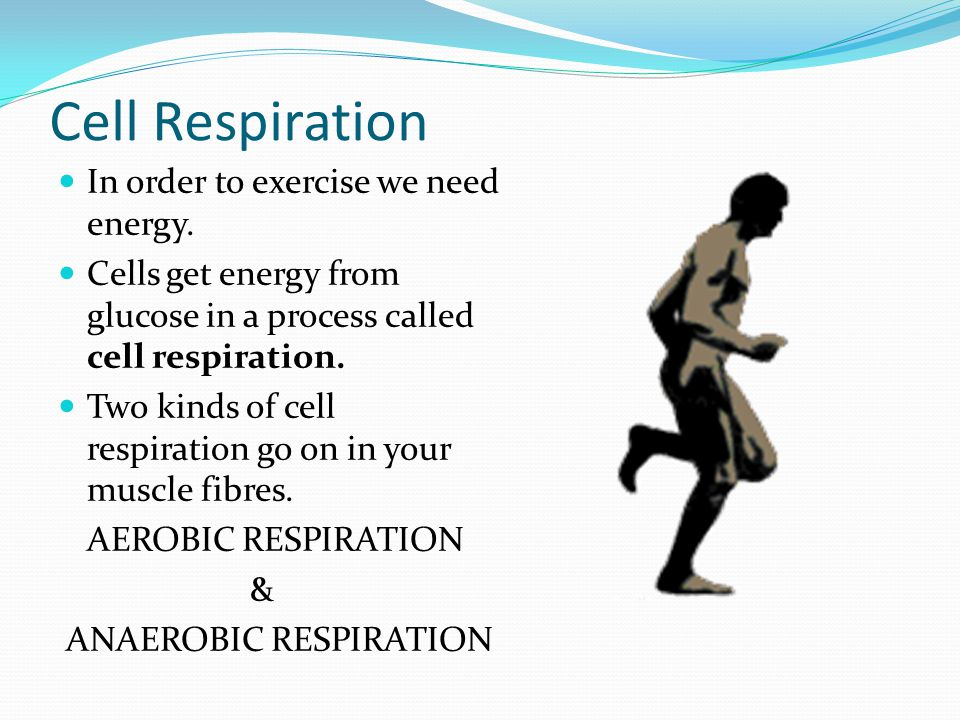 Cell Respiration In order to exercise we need energy.