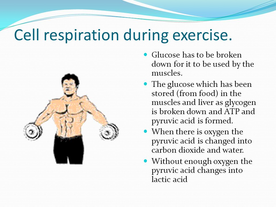 Cell respiration during exercise. Glucose has to be broken down for it to be used by the muscles.