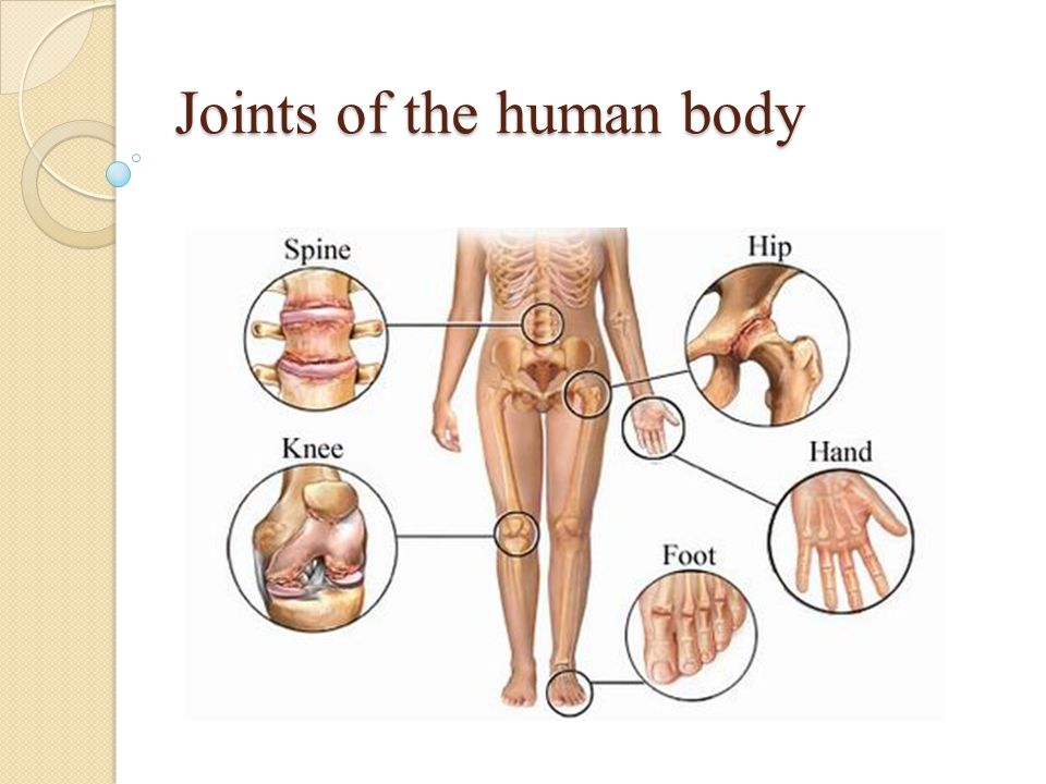 Joints of the human body. Joints are the point of contact ...