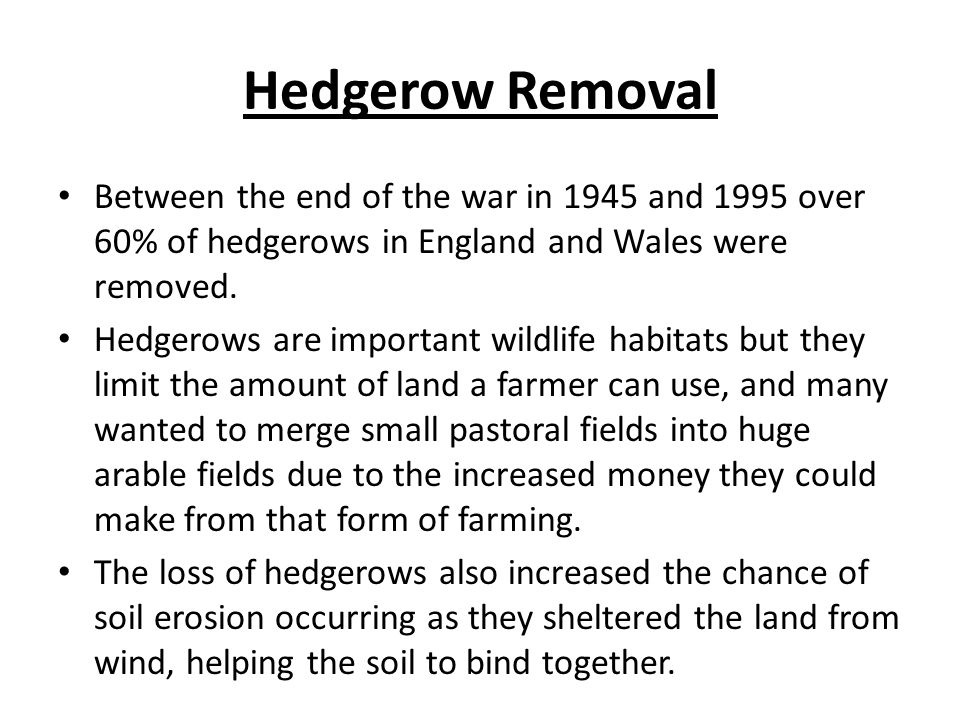 Hedgerow Removal Between the end of the war in 1945 and 1995 over 60% of hedgerows in England and Wales were removed.