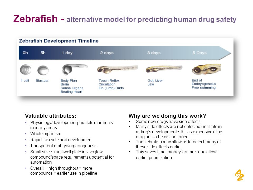 Zebrafish - alternative model for predicting human drug safety Why are we doing this work.