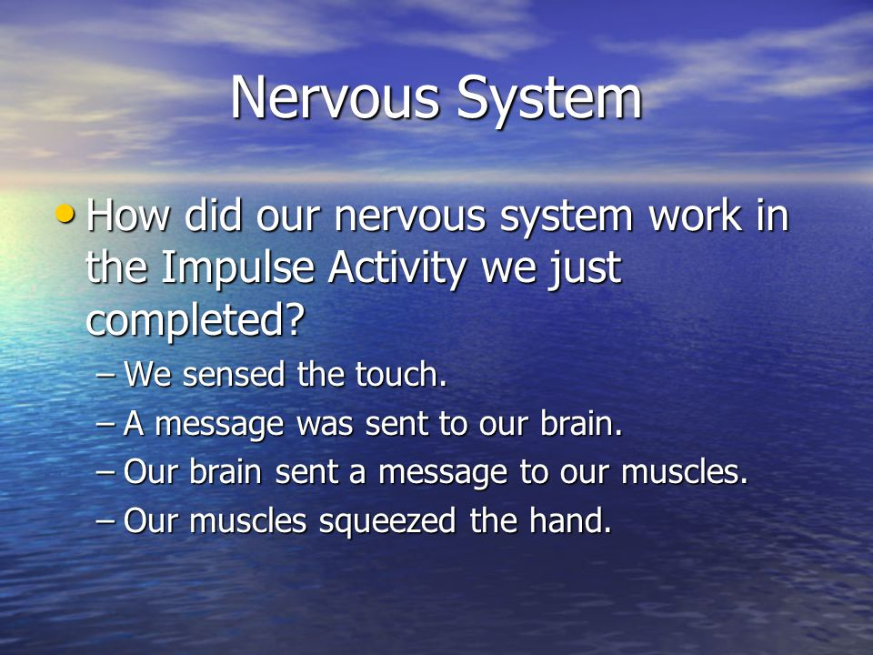 How did our nervous system work in the Impulse Activity we just completed.