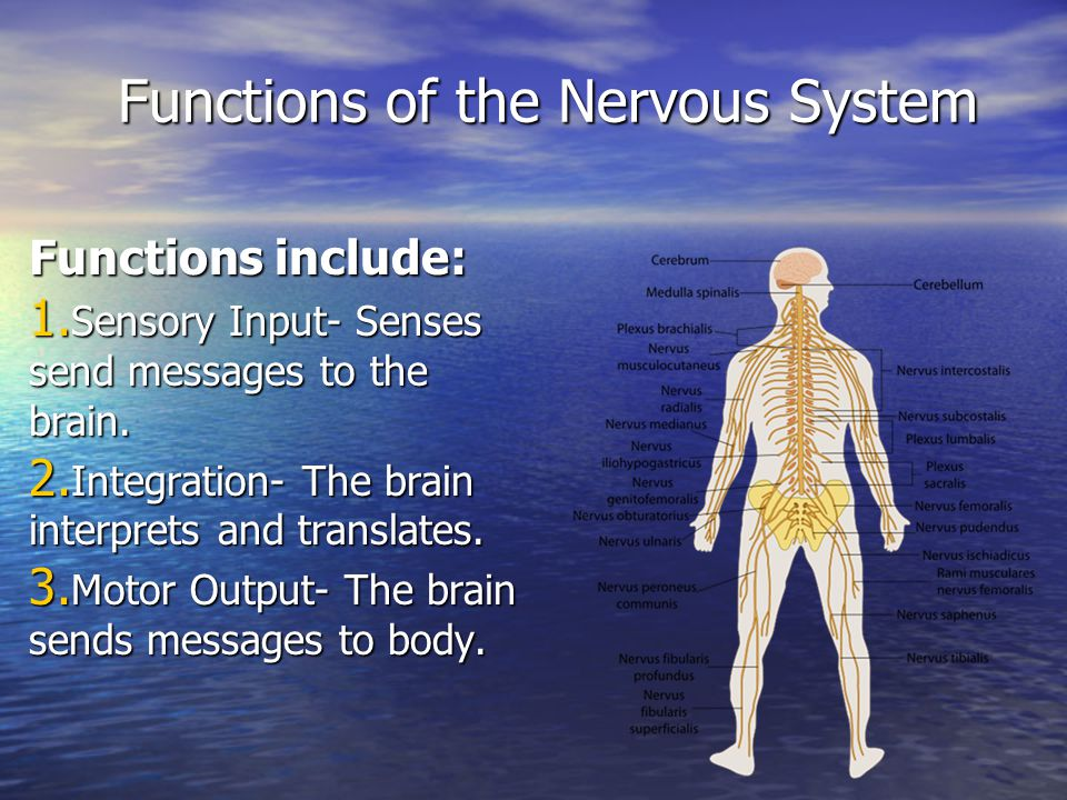 Functions of the Nervous System Functions include: 1.