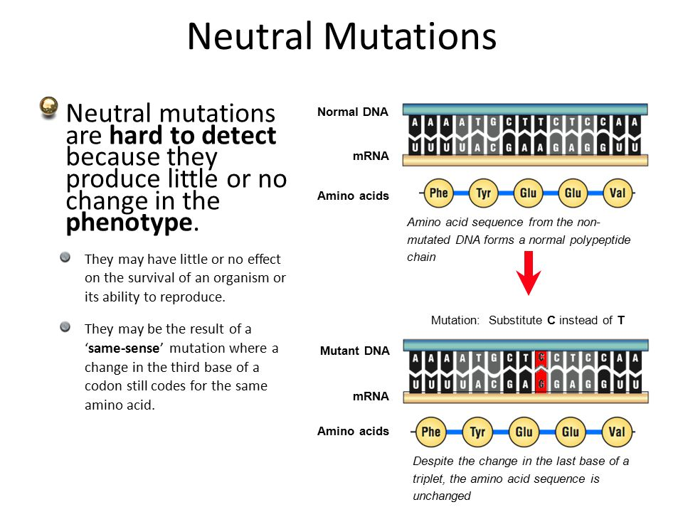 Mutations Fitness Of Mutations The Fitness Of A Mutation Describes