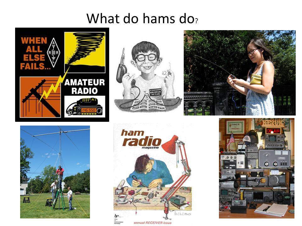 What do hams do