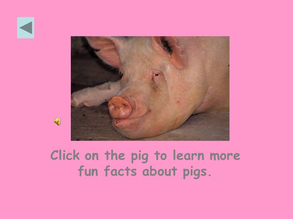 KINDERGARTEN WEBQUEST Developed by Rachael VickRachael Vick