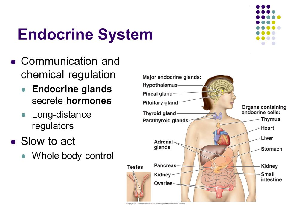 ENDOCRINE SYSTEM Chapter 45. Endocrine System Communication and ...
