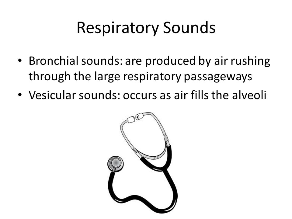 Respiratory Sounds Bronchial sounds: are produced by air rushing through the large respiratory passageways Vesicular sounds: occurs as air fills the alveoli