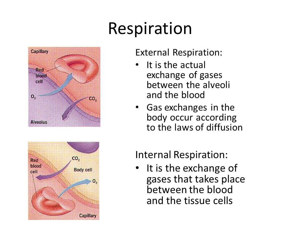 Respiration External Respiration: It is the actual exchange of gases between the alveoli and the blood Gas exchanges in the body occur according to the laws of diffusion Internal Respiration: It is the exchange of gases that takes place between the blood and the tissue cells