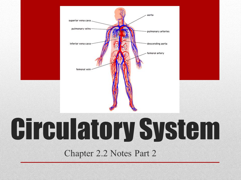 Circulatory System Chapter 22 Notes Part 2 Parts Of The Heart