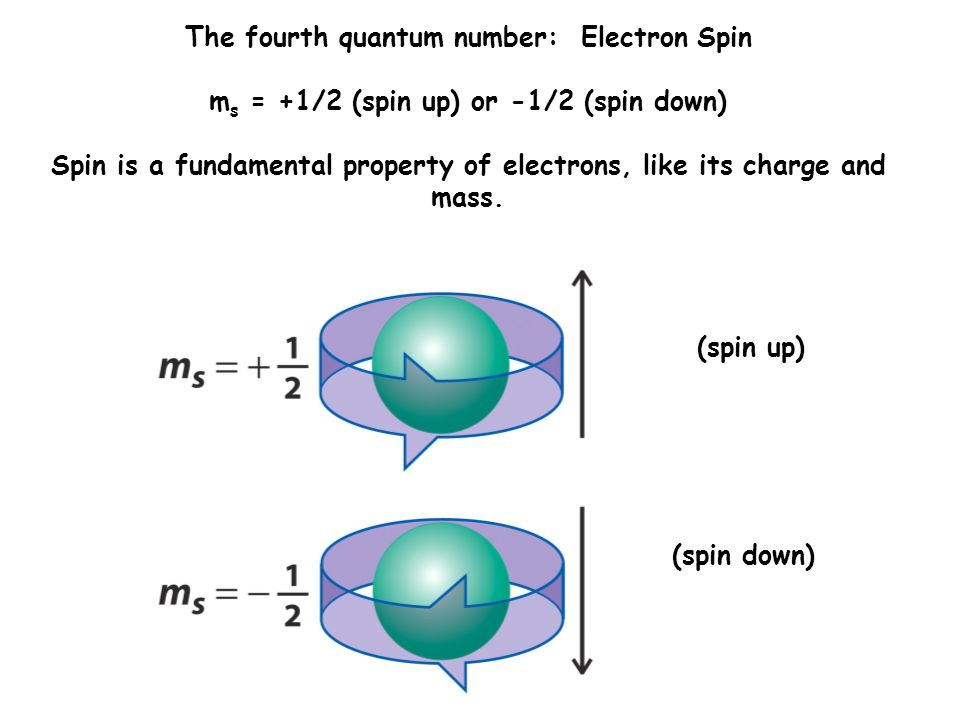 The fourth quantum number: Electron Spin m s = +1/2 (spin up) or -1/2 (spin down) Spin is a fundamental property of electrons, like its charge and mass.
