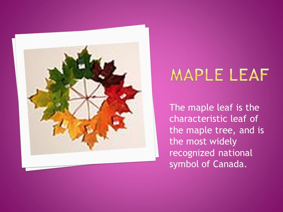 National Symbols Of Canada Are The Symbols That Are Used In Canada