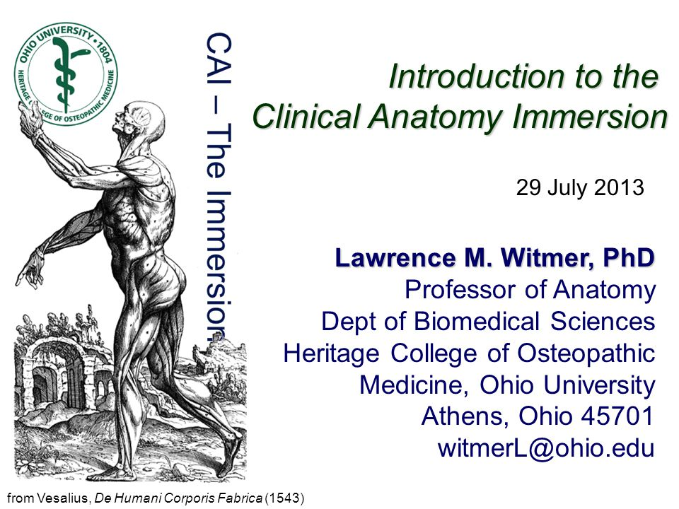 Introduction To The Clinical Anatomy Immersion Lawrence M Witmer