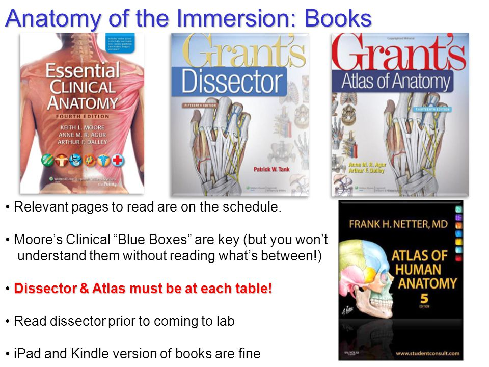 Introduction to the Clinical Anatomy Immersion Lawrence M. Witmer ...
