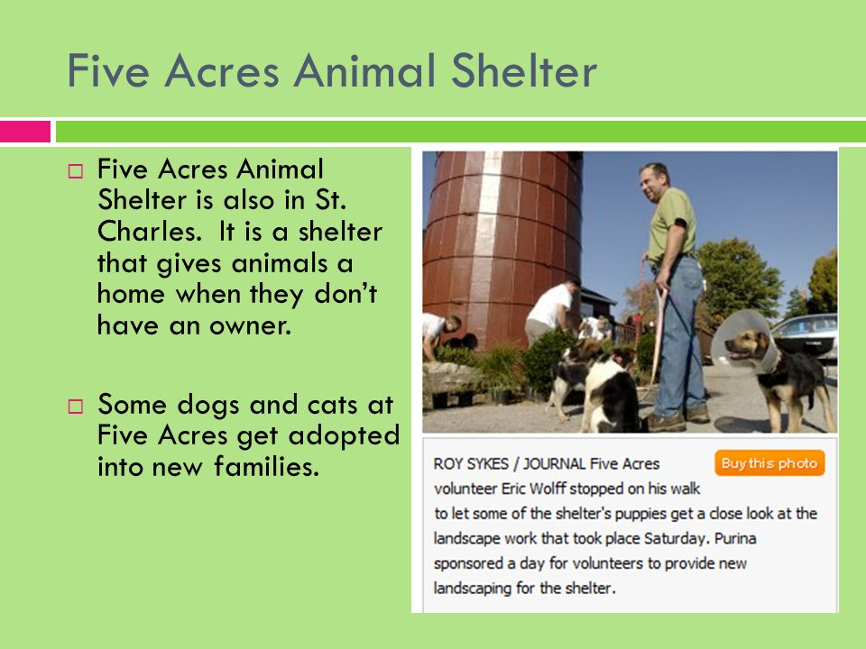 Homeless Pets In Our Country Facts About U S Animal Shelters