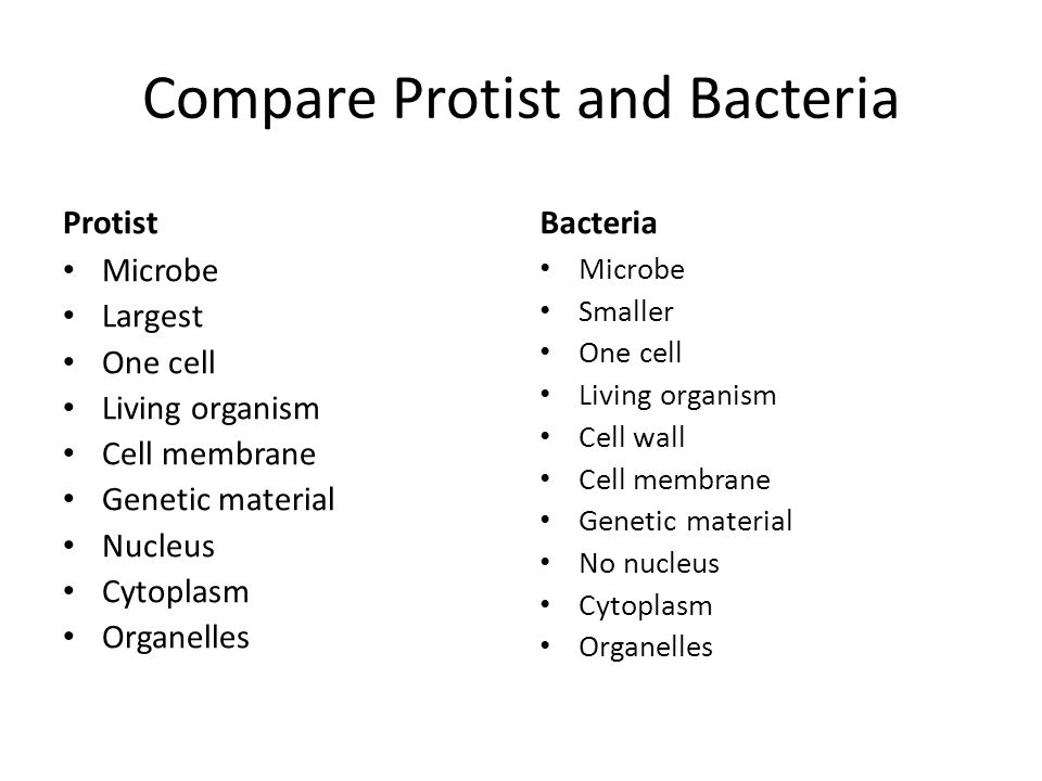 Venn diagram of protists bacteria and human cells search for 7c45 world of microbes kingdoms scientists classify living rh slideplayer com venn diagram of bacteria virus vs bacteria venn diagram ccuart Image collections