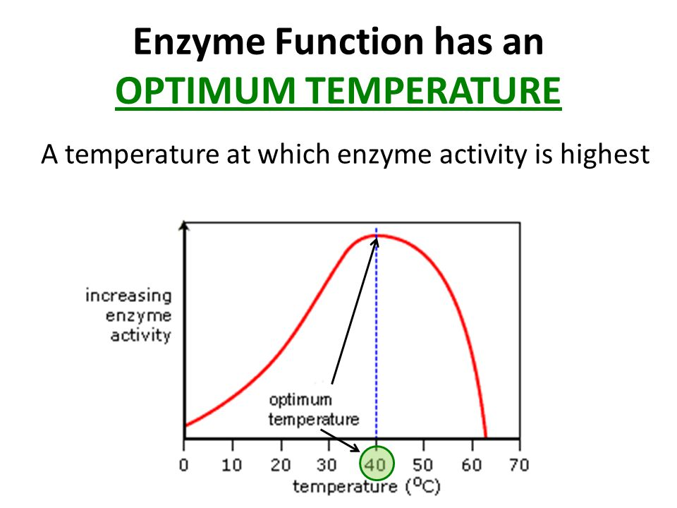 Enzyme Function has an OPTIMUM TEMPERATURE A temperature at which enzyme activity is highest