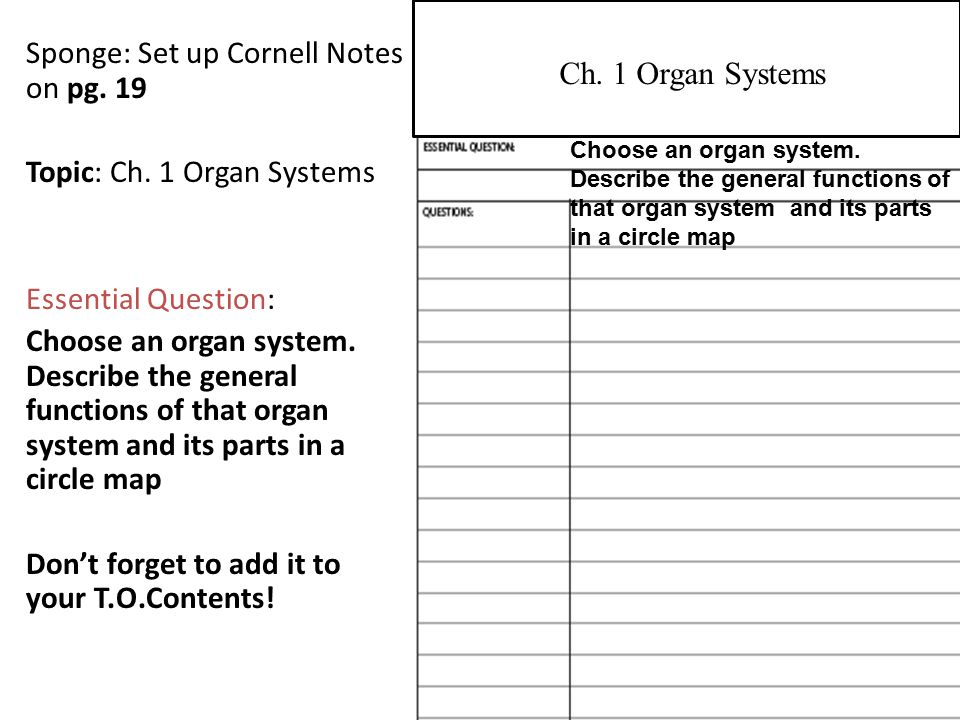 Sponge: Set up Cornell Notes on pg. 19 Topic: Ch.